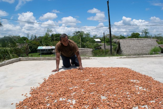 Eladio turning over his drying cacao beans